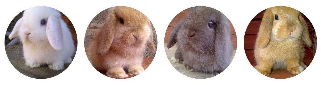 SEO Rabbits