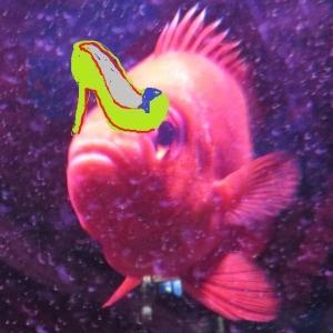 Wendy Dessler Shoe